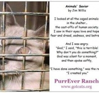animal-savior