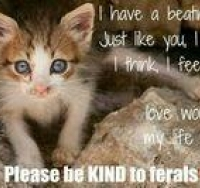 be-kind-to-ferals
