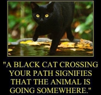 black-cat-quote